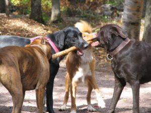 Ultimate Guide to Dog Park Safety