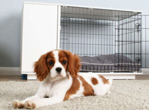 Puppy posing indoors with crate in background