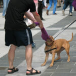 Man tugging object away from dog in public